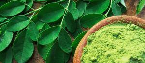 Organic Moringa Products Manufacturer